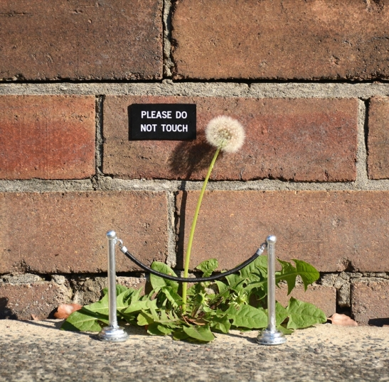 2. funny-sign-urban-art-michael-penderson-australia-11